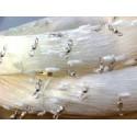 Seabass - 500m x 1.4mm x 200 swivels